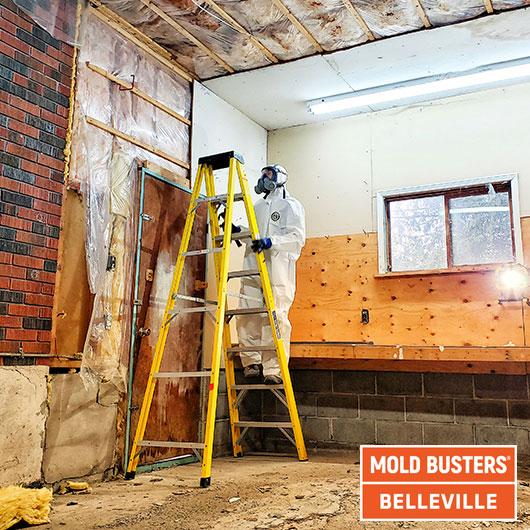 Élimination des moisissures dans le garage - Belleville