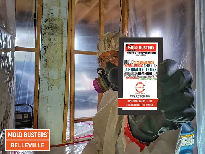 Elimination de la moisissure à Belleville