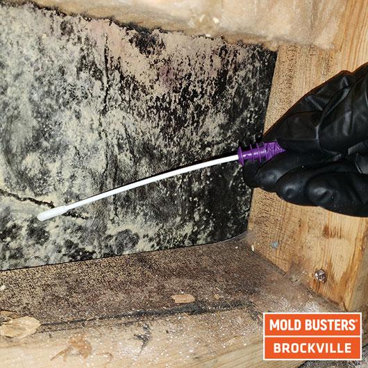 Test instantané sur la moisissure - Brockville