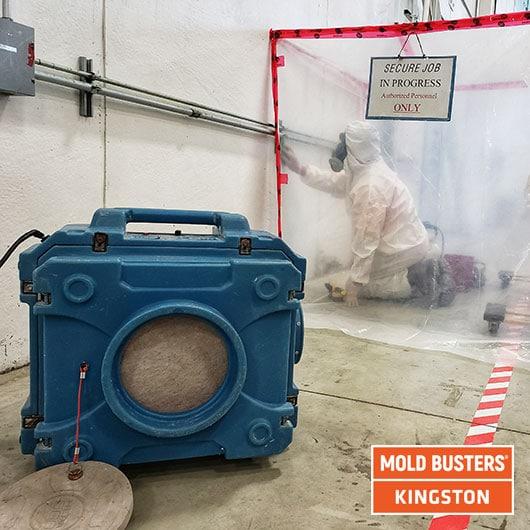 Élimination des moisissures commerciales - Kingston