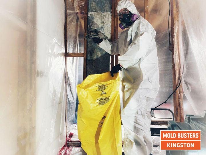 élimination de la moisissure à Kingston