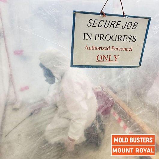 Assainissement commercial des moisissures - Mont Royal