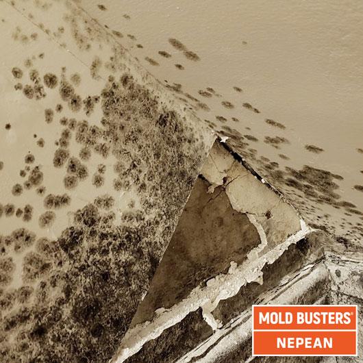 Cloisons sèches en amiante - essais en vrac - Nepean