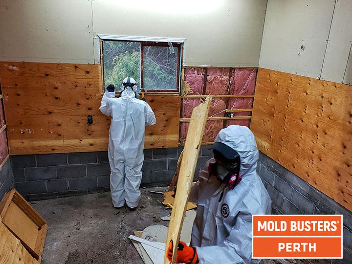 Elimination de la moisissure à Perth
