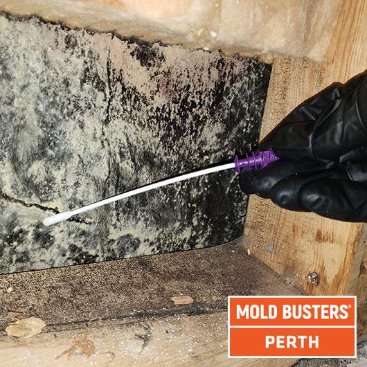 Test de moisissure - Perth