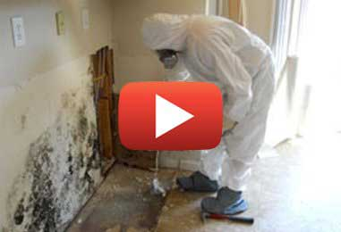 Why Get a Mold Home Inspection?
