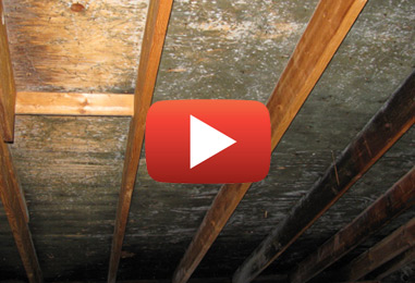 How to Handle Attic Mold Problems