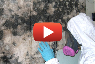 Everything You Need to Know about Black Mold