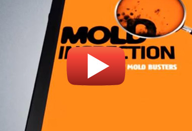 Mold Busters: The Game