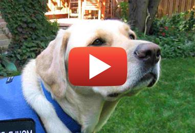 Qu'est-ce qu'une inspection canine de moisissure?