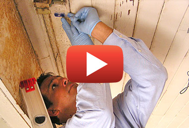 Mold Inspections and Removal