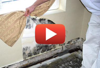 Mold Inspection & Remediation Services in Embrun
