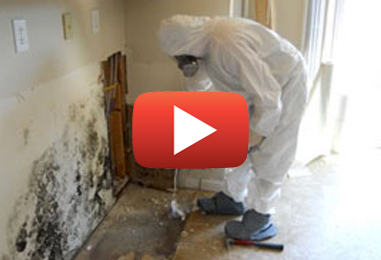 Mold Inspections and Removal in Clarence-Rockland