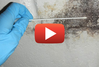 Mold Removal Services in Cardinal