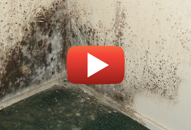 Mold Proof Your Home: Moisture Control Tips