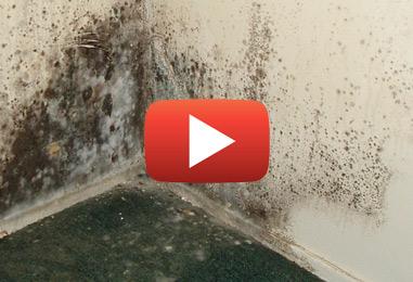 Astuces de prévention de la moisissure