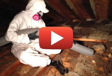 What to Do If You Find Asbestos