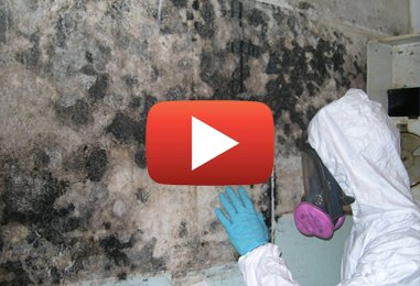 How to Remove Mold Effectively
