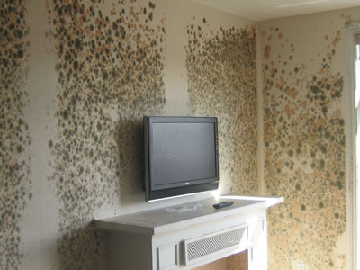 Mold News: Living With Mold