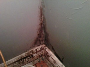 How to Avoid Mold Lawsuits