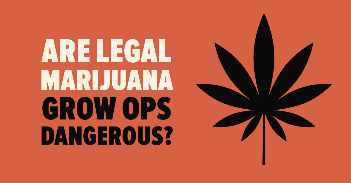 Are legal grow ops dangerous