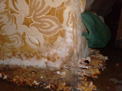 Water damage after floods - Mold Busters