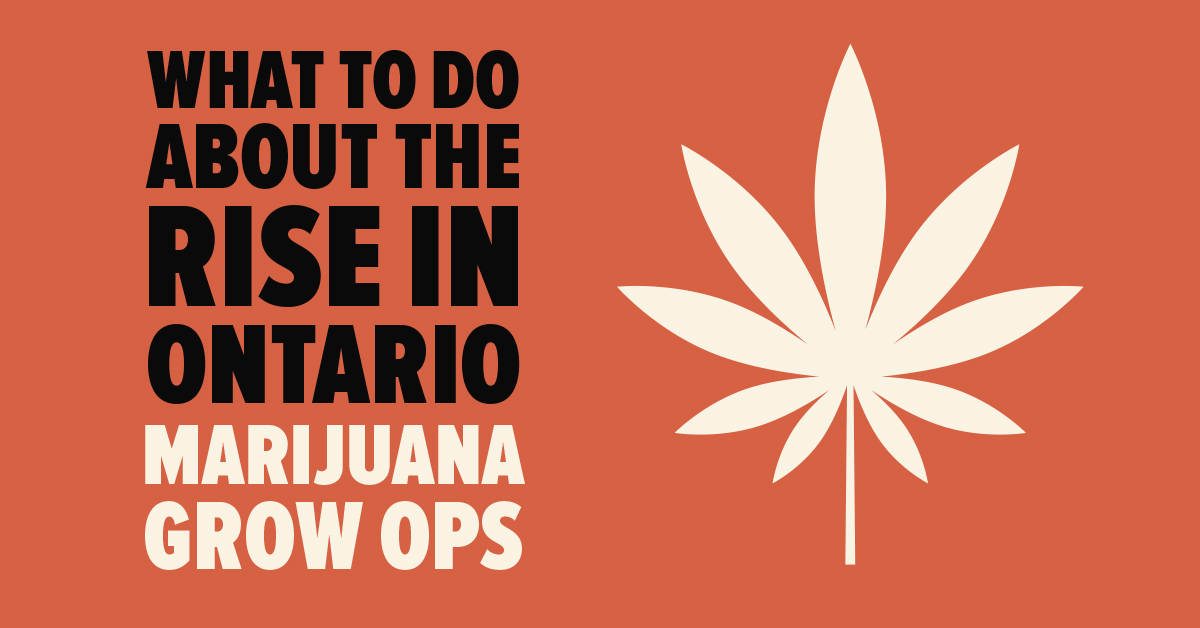What to Do About the Rise in Ontario Marijuana Grow Ops