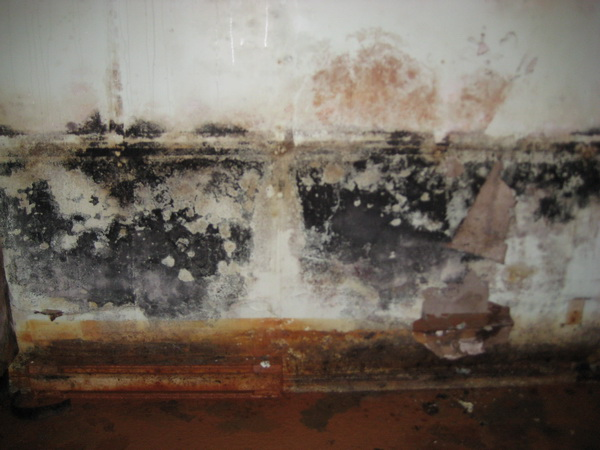 How to Prevent Basement Mold