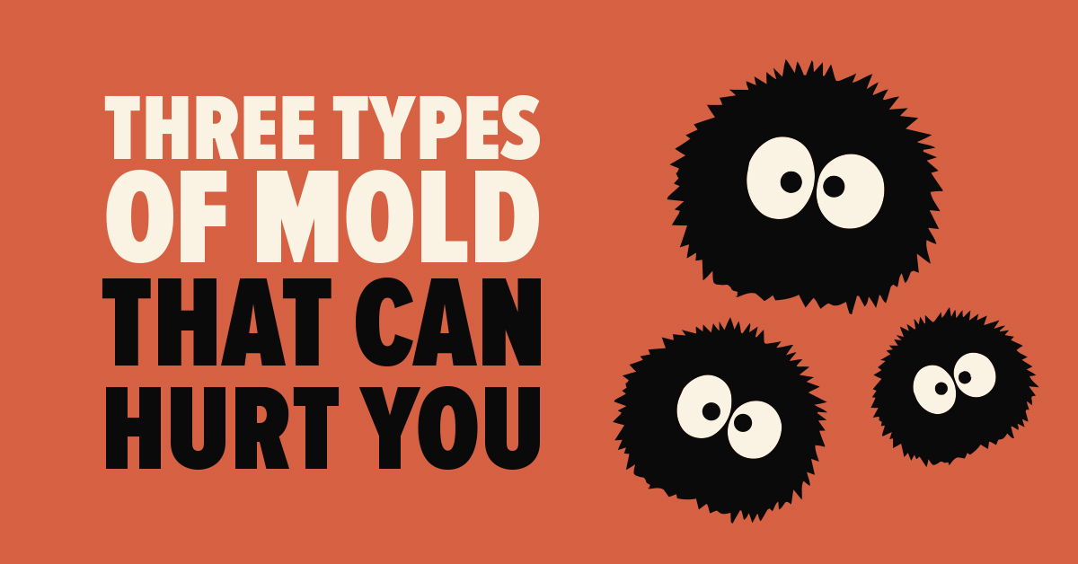 three types of mold