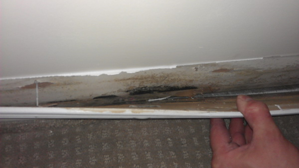 Finding a Reliable Mold Inspection Company