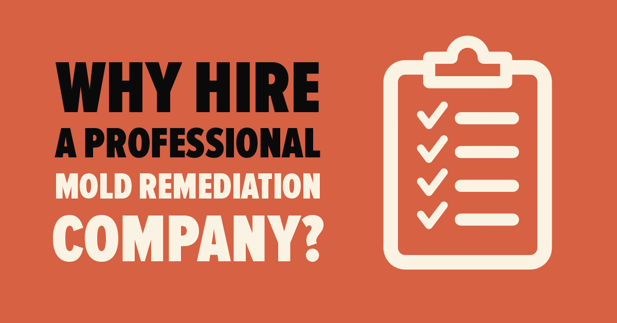 Why Hire a Professional Mold Remediation Company?