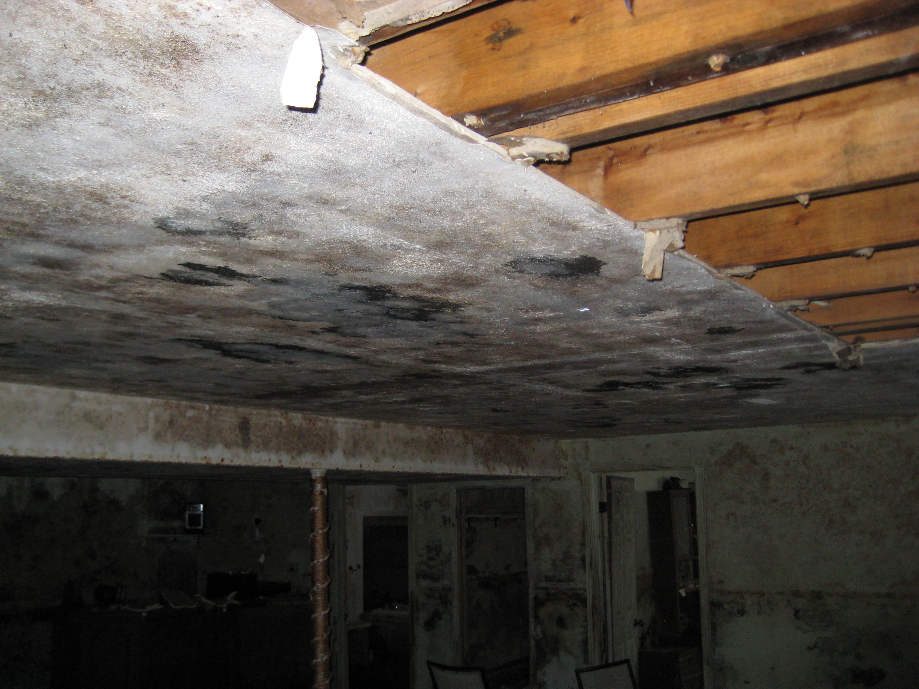 Recognize the Signs of a Household Mold Problem