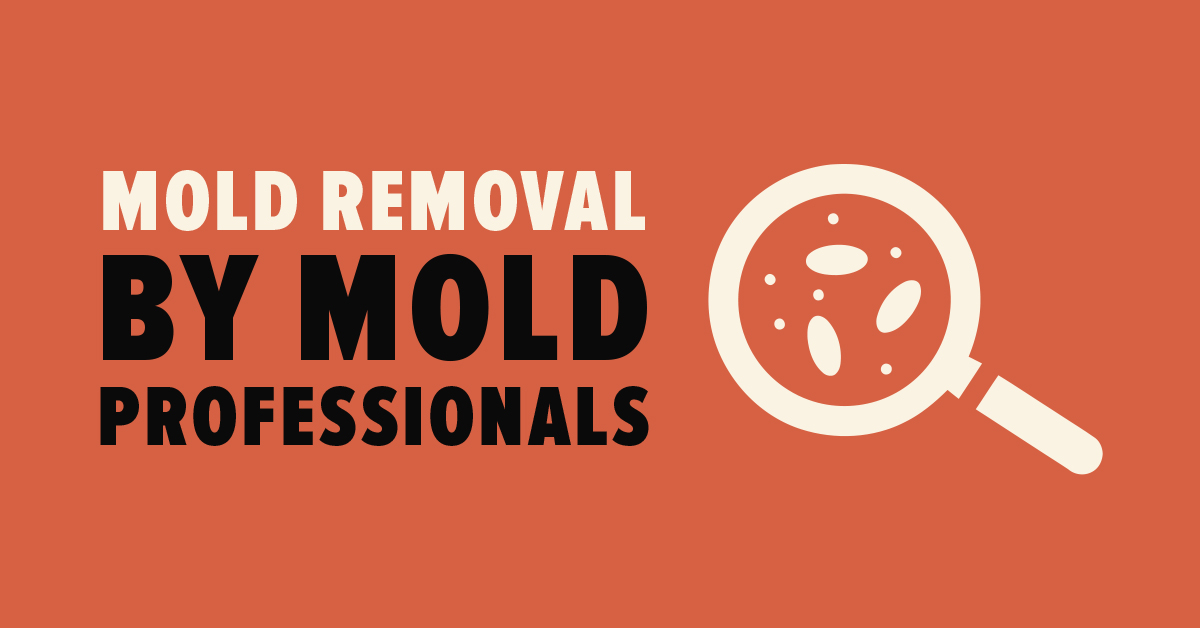 Mold Removal By Mold Professionals