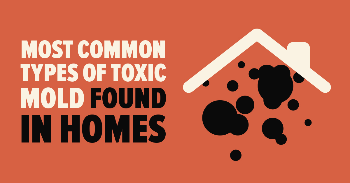 Most Common Types Of Toxic Mold Found In Homes Mold