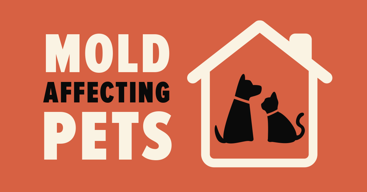 Mold Affecting Pets