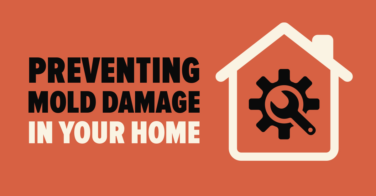 Preventing Mold Damage in Your Home
