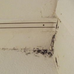 Black Mold Spread In Building