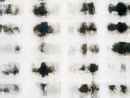 How Quickly Does Black Mold Spread?
