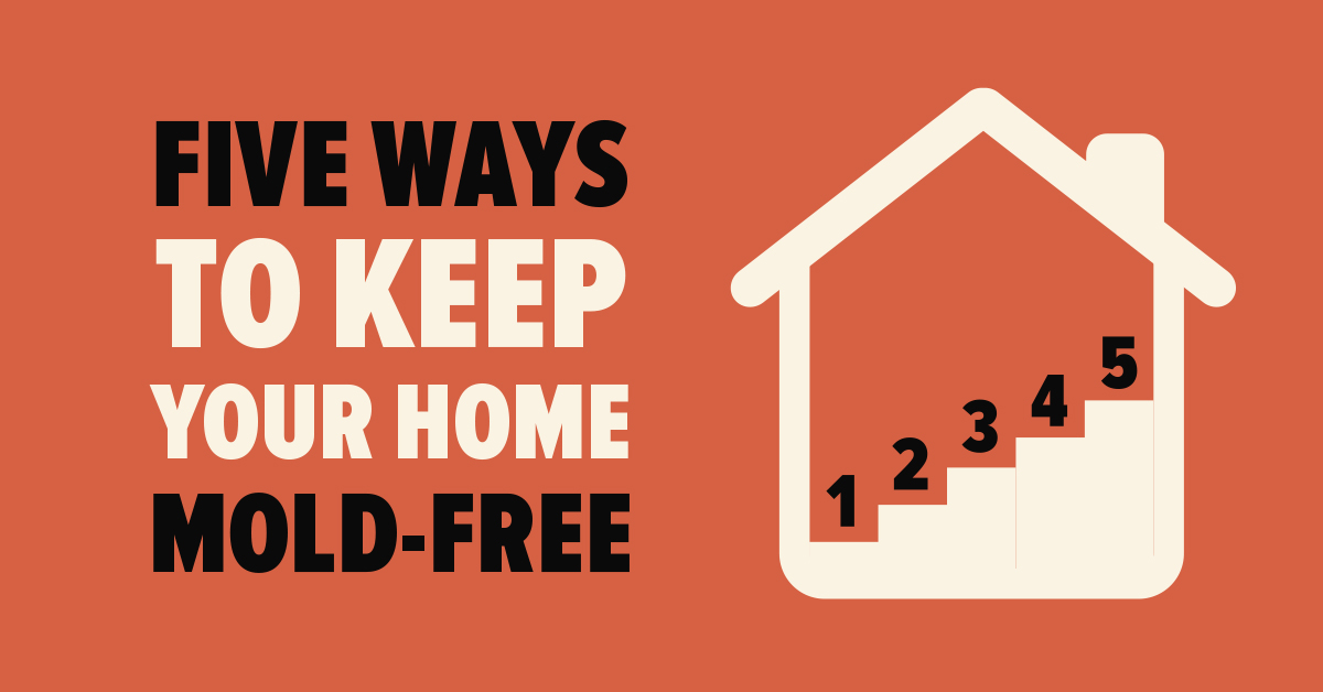 Five Ways to Keep Your Home Mold-Free