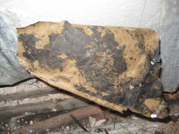 Are Mold Dog Inspections Safe for Dogs?