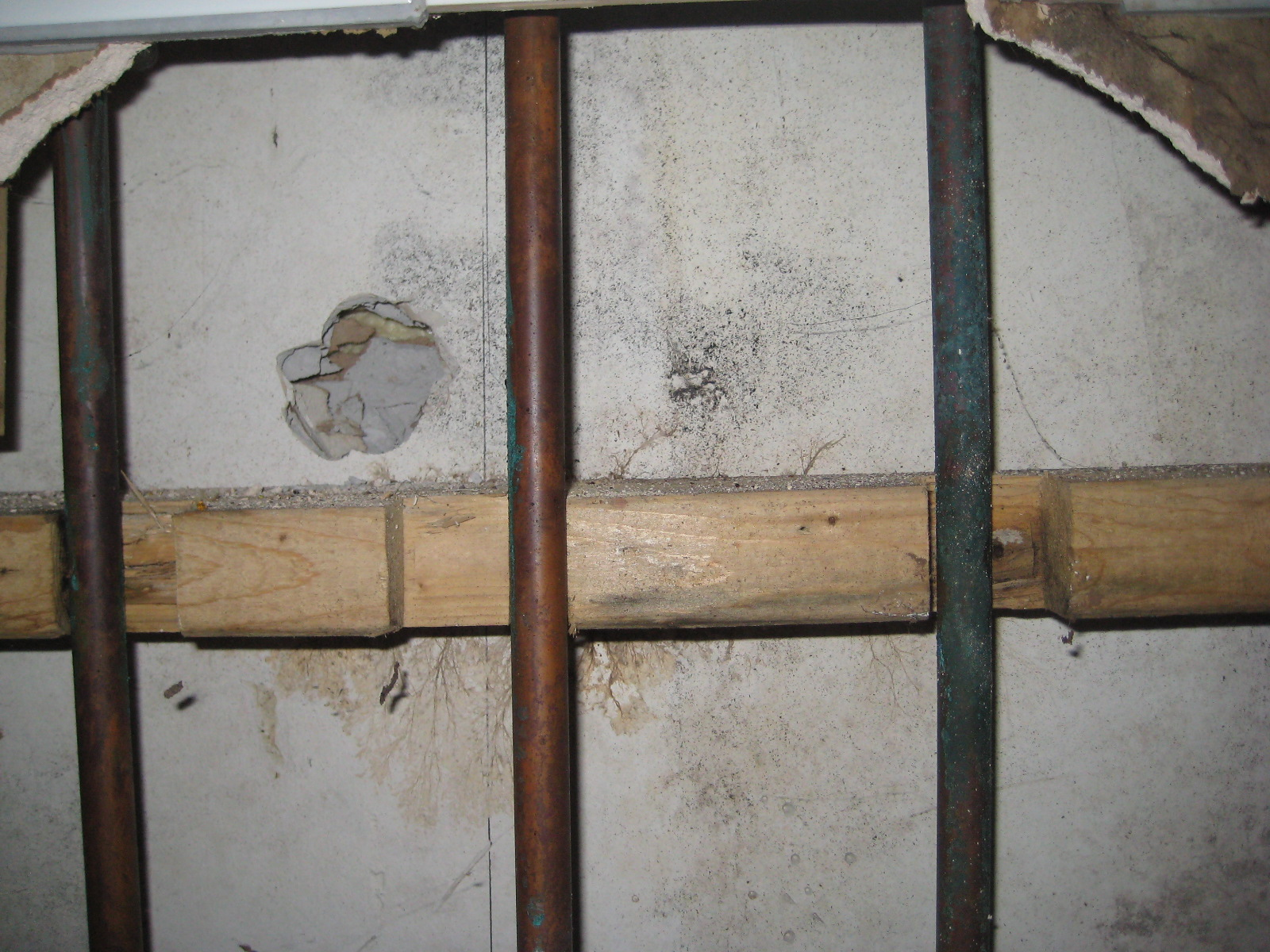 Common Myths about Mold Growth