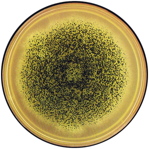 Aspergillus carbonarius