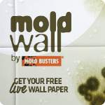 mold-wallpaper