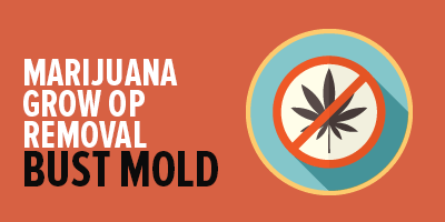 Marijuana Grow Op Mold Removal Services | Mold Busters