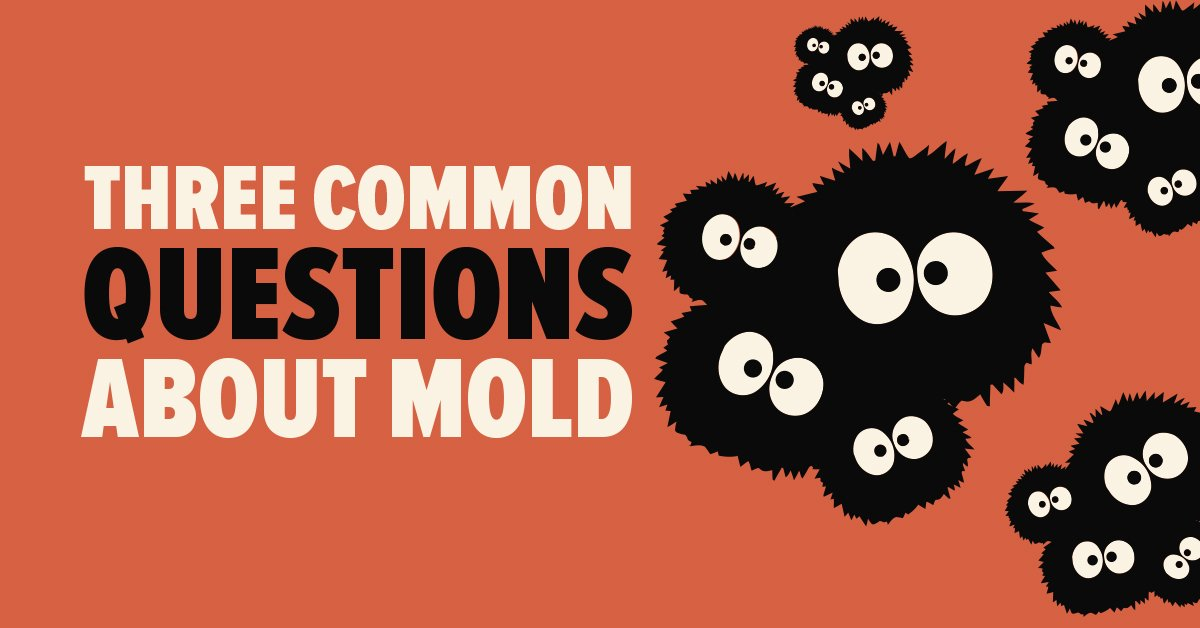 Three Common Questions about Mold