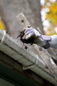 Gutter cleaning to prevent moisture problems