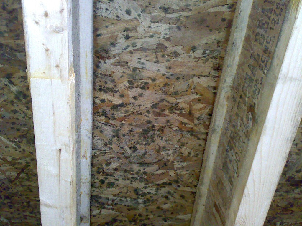 Black Mold on Wood Wall - Mold Busters Ottawa