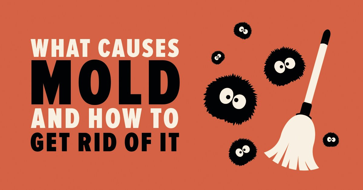 What Causes Mold and How to Get Rid of It