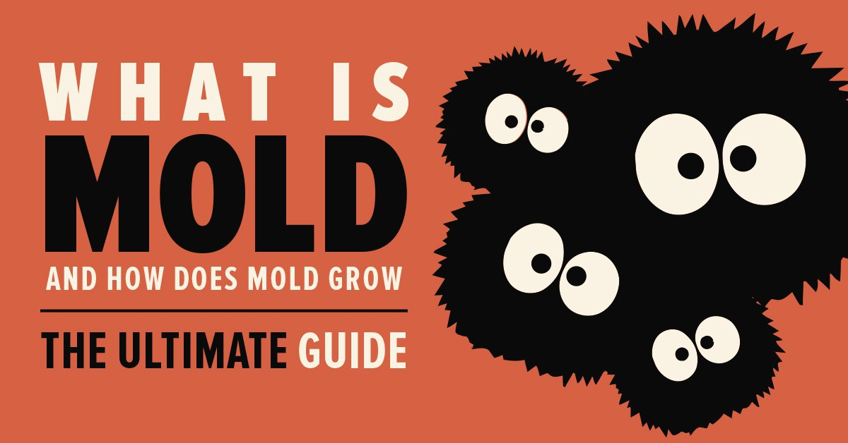 Preventing Mold - The Ultimate Guide