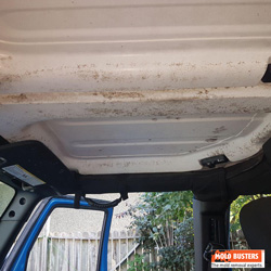 mold in car 02